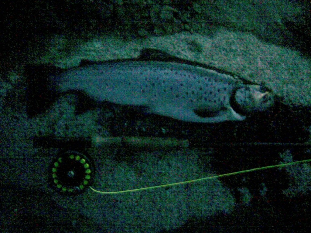 Late night trout blue mountains fishing for Blue creek fishing report
